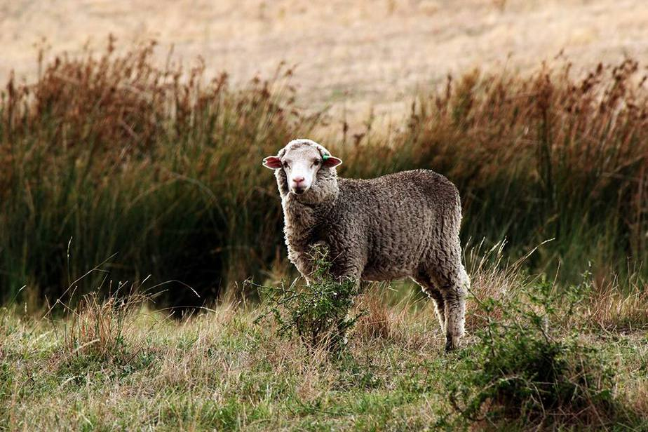 Kurzinfo Wolle